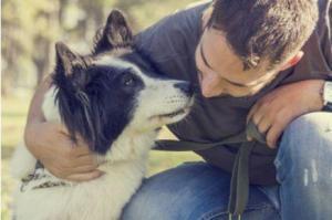 Seminar für Hundehalter