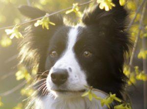 Vorträge und Workshops für Hundehalter